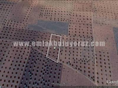 Kilis Demirışık Satılık Muhtelif Arazi