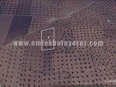 Kilis Bölük Satılık Muhtelif Arazi