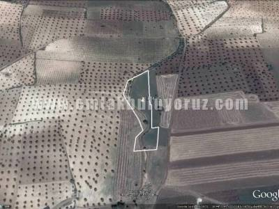 Kilis Kuskunkıran Satılık Muhtelif Arazi