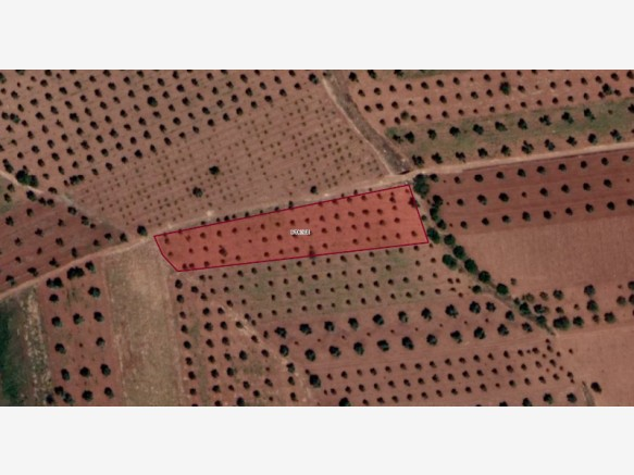 Kilis Bölük Satılık Bahçe