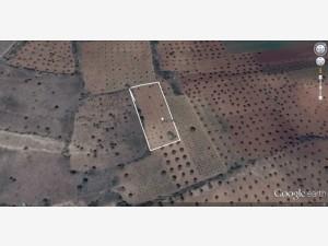 Kilis Tanbıralı Satılık Muhtelif Arazi