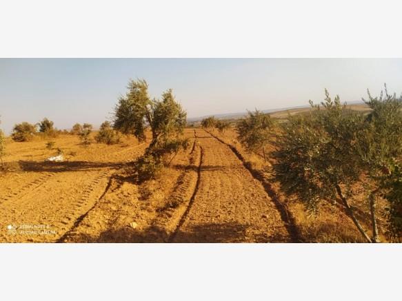 Gaziantep Bulduk Satılık Bağ+Bahçe