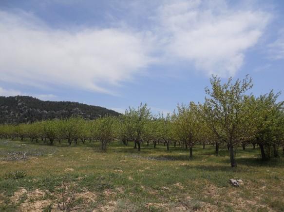 Mersin Elma Kuzu Satılık Bahçe