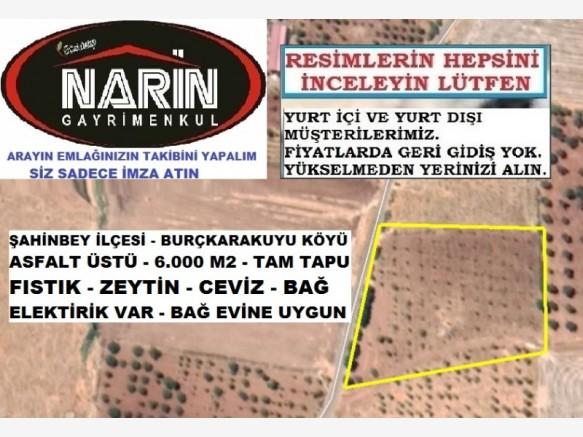 Gaziantep Burç Karakuyu Satılık Bağ+Bahçe