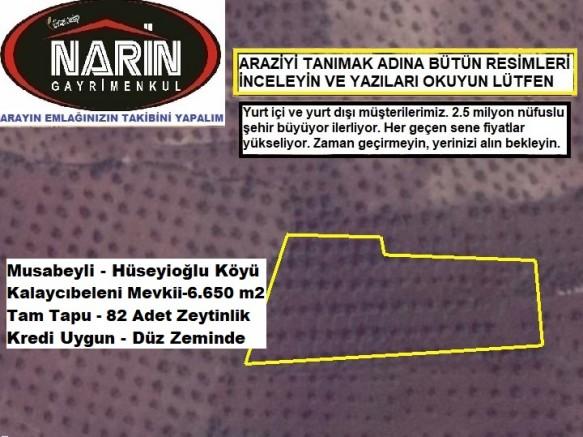 Kilis Hüseyinoğlu Satılık Bağ+Bahçe